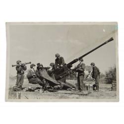 Photo, Legion 'Flandern', 1942